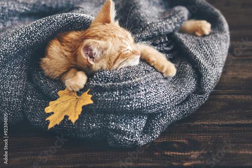 Fototapeta Gigner kotě spí