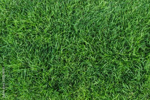 Fotografie, Obraz green grass texture