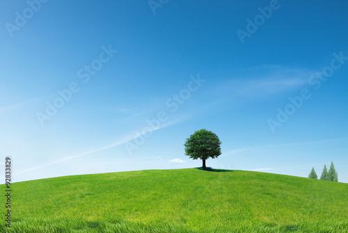 나무와 언덕 Fototapet