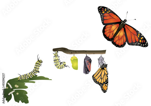 Life cycle of monarch butterfly Fototapete