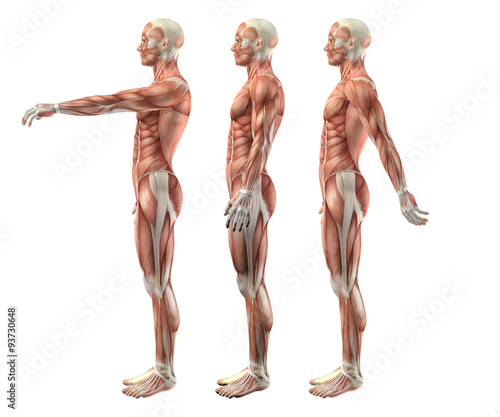 Canvas 3D male medical figure showing shoulder flexion, extension and h