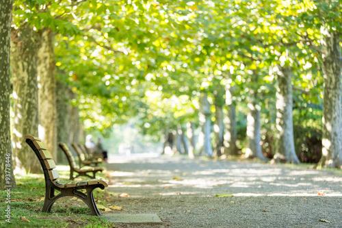 Fotografia プラタナスの並木