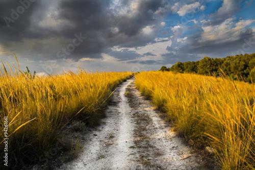 Fotografia El camino de regreso