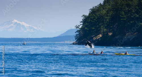 Jumping orca whale near canoeist
