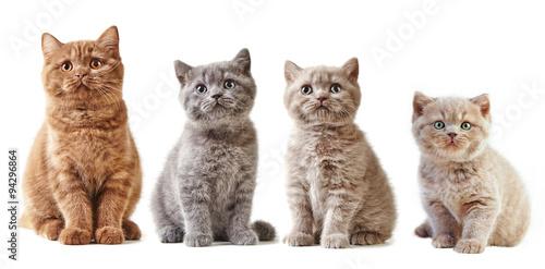 various british kittens #94296864