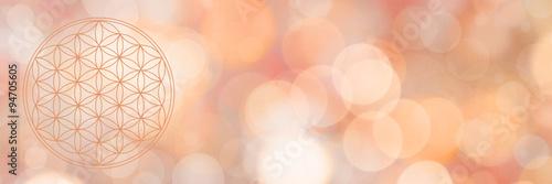 Fotografia blume des lebens - warmes wundervolles licht - banner