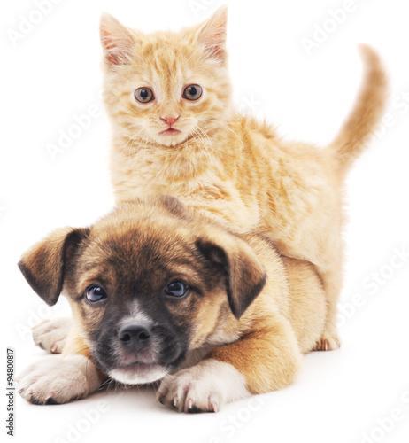 Fototapeta Rred kitten in puppy.