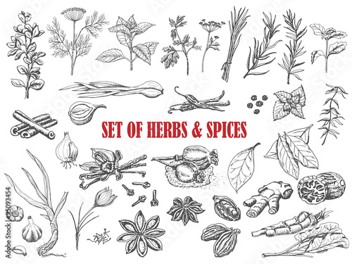 Photo Set of Herbs and spices in sketch style
