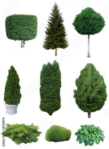 Billede på lærred Set of trees and shrubs