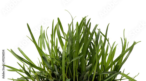 Fényképezés Green grass isolated white background. Sedge.