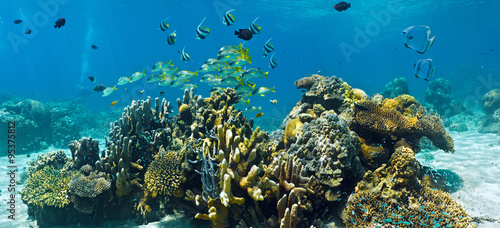 Shoal of fish on the coral reef  - panorama #95375812
