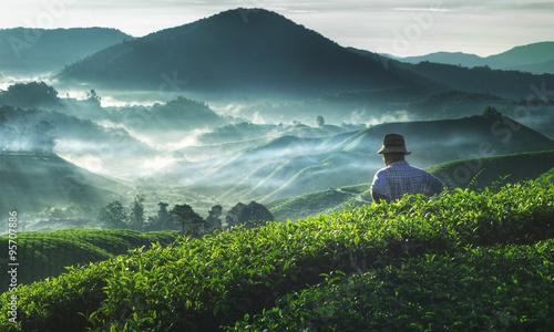 Photo Farmer Tea Plantation Malaysia Agriculture Rural Concept