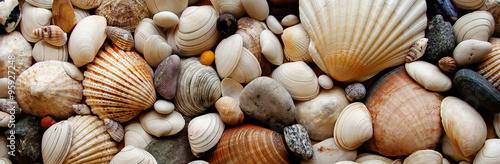 Cuadros en Lienzo Sea Shells Seashells Panorama - assorted shells / pebbles - back