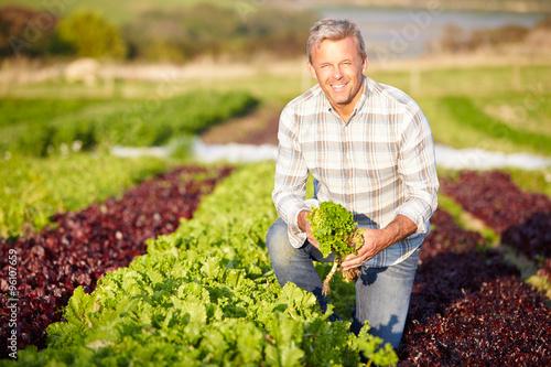 Bauer Ernten Bio-Salat Blätter auf dem Bauernhof Fototapete