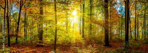 Fototapeta Leśna panorama jesienią z promieniami słońca na wymiar