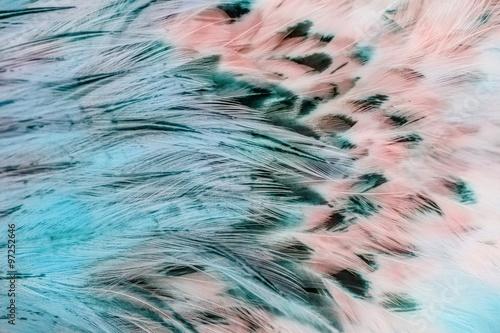 Grupa jasnych brązowych piór niektórych ptaków