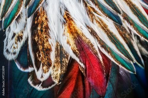 Naklejka premium Jasny brązowy grupa piór niektórych ptaków