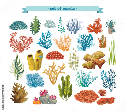 Fototapeta premium Zestaw kolorowych korali i alg.