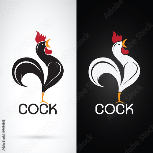 Vector image of a cock design on white background and black back Fototapet