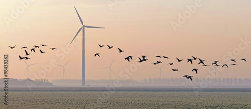 Flock of geese flying over a field in winter