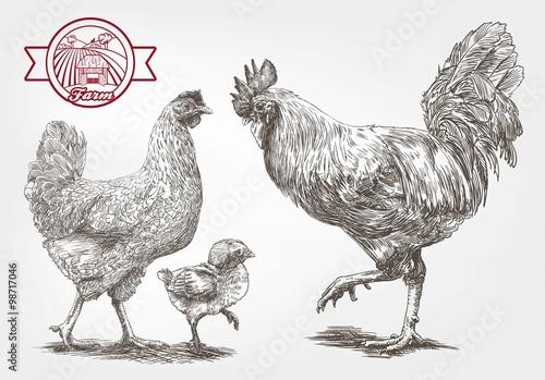 Stampa su Tela Sketch of brood-hen