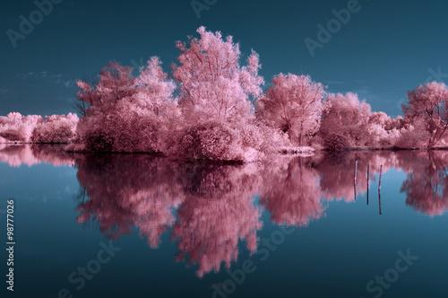 Canvas Print infrarouge