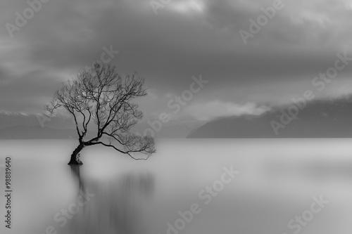 samotne-drzewo-nad-jeziorem-wanaka-w-nowej-zelandii