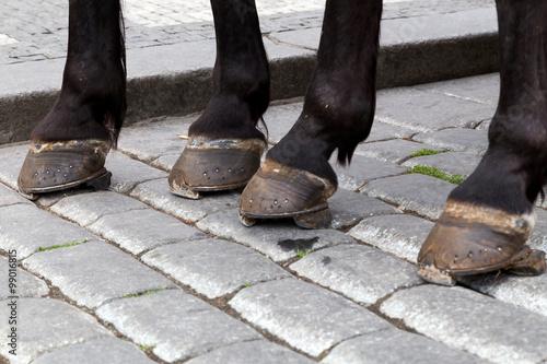 Obraz na plátne foot horse