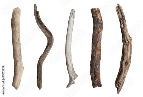 Obraz na plátne Set of dry tree branch