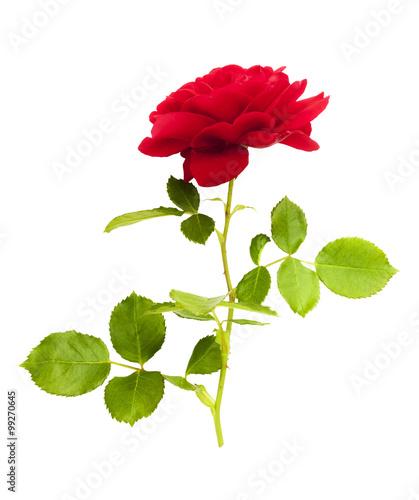 Rote Rose #99270645