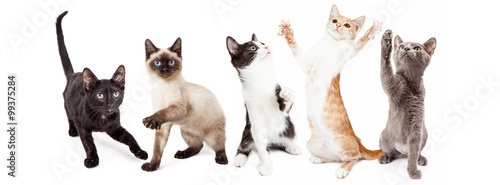 Fotografia Five Cute Kittens Playing Together