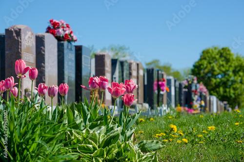 Fotografie, Obraz Aligned headstones in a cemetary