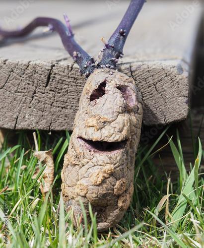 фотография closeup of mister potato head, arts and crafting
