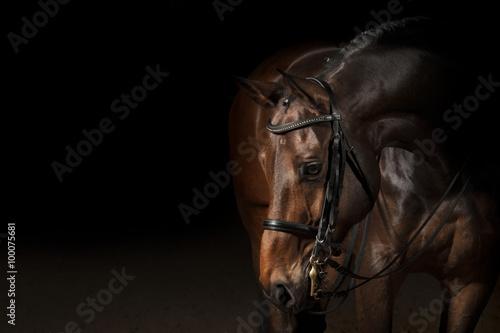 Fototapeta Portrét sportovní koně pro drezúru