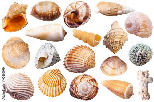 Fotografia set of different mollusk shells isolated on white