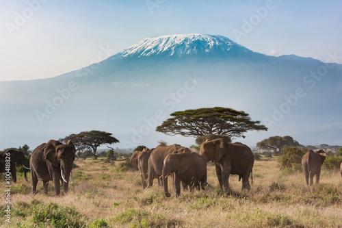 Wallpaper Mural Plains of Africa at Mt. Kilimanjaro