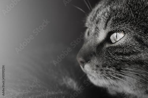 Curious gaze of cat