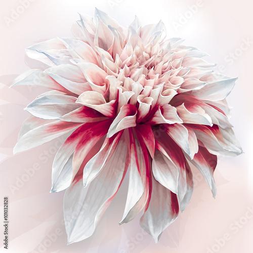Foto Watercolor Dahlia