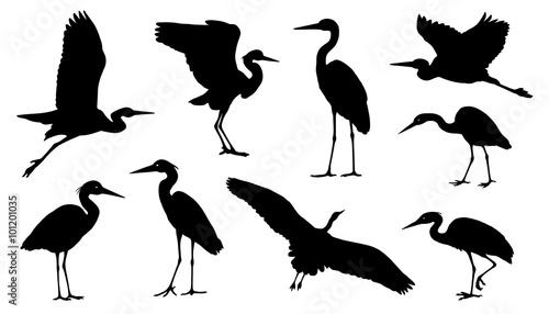 Fotografie, Tablou heron silhouettes