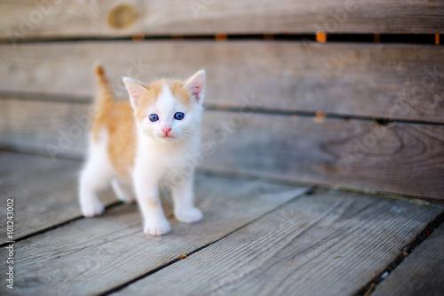 Photo kitten on the street