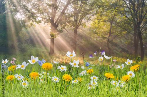 Fotografie, Obraz Floral background