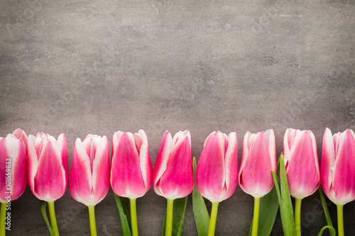 Tulips on the grey  background.