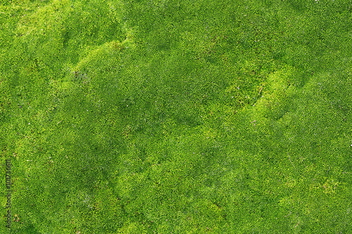 Canvas Print green moss for background texture