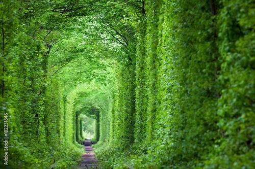 Fantastyczny prawdziwy tunel miłości, zielone drzewa i tory kolejowe