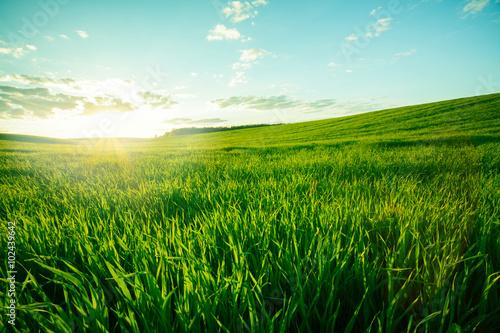 Fotografia Green meadow
