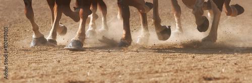 Fotografia Hoof Dust