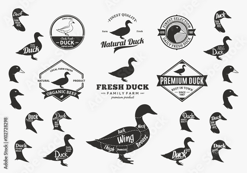 Vector Duck Logo, Icons, Charts and Design Elements Tapéta, Fotótapéta