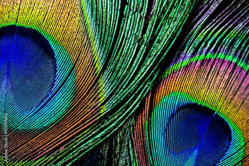 Carta da parati Peacock feather , close up