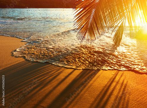 Foto Schöner Sonnenuntergang auf den Seychellen Strand mit Palmen Schatten