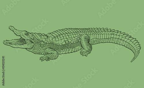 Fototapeta premium Hand drawn crocodile. Vector illustration